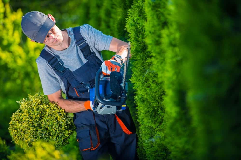 Hedge Trimmer Australia