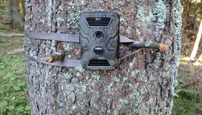 Best Hunting Trail Cameras