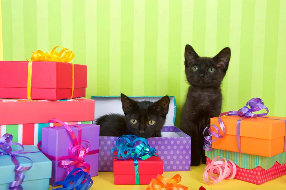best gifts for cat lovers