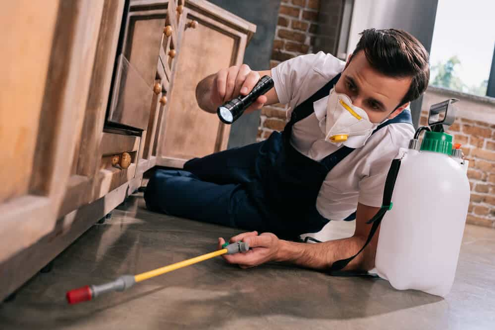 best pest control experts melbourne