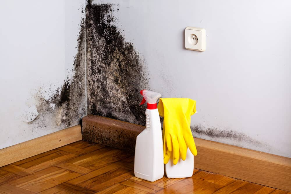 best mould removers australia